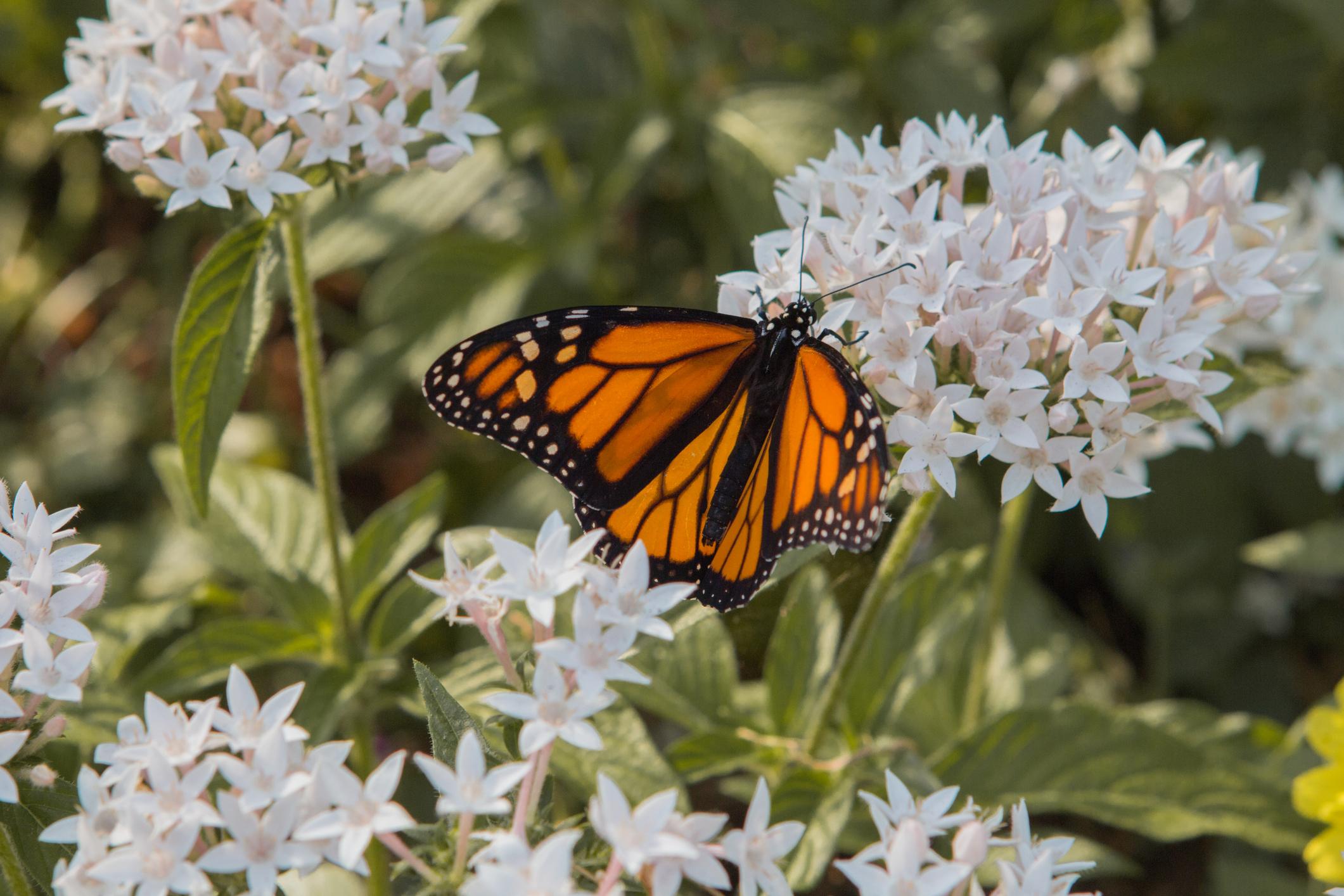 Butterfly Garden Set Up Planting In Gainesville Fl