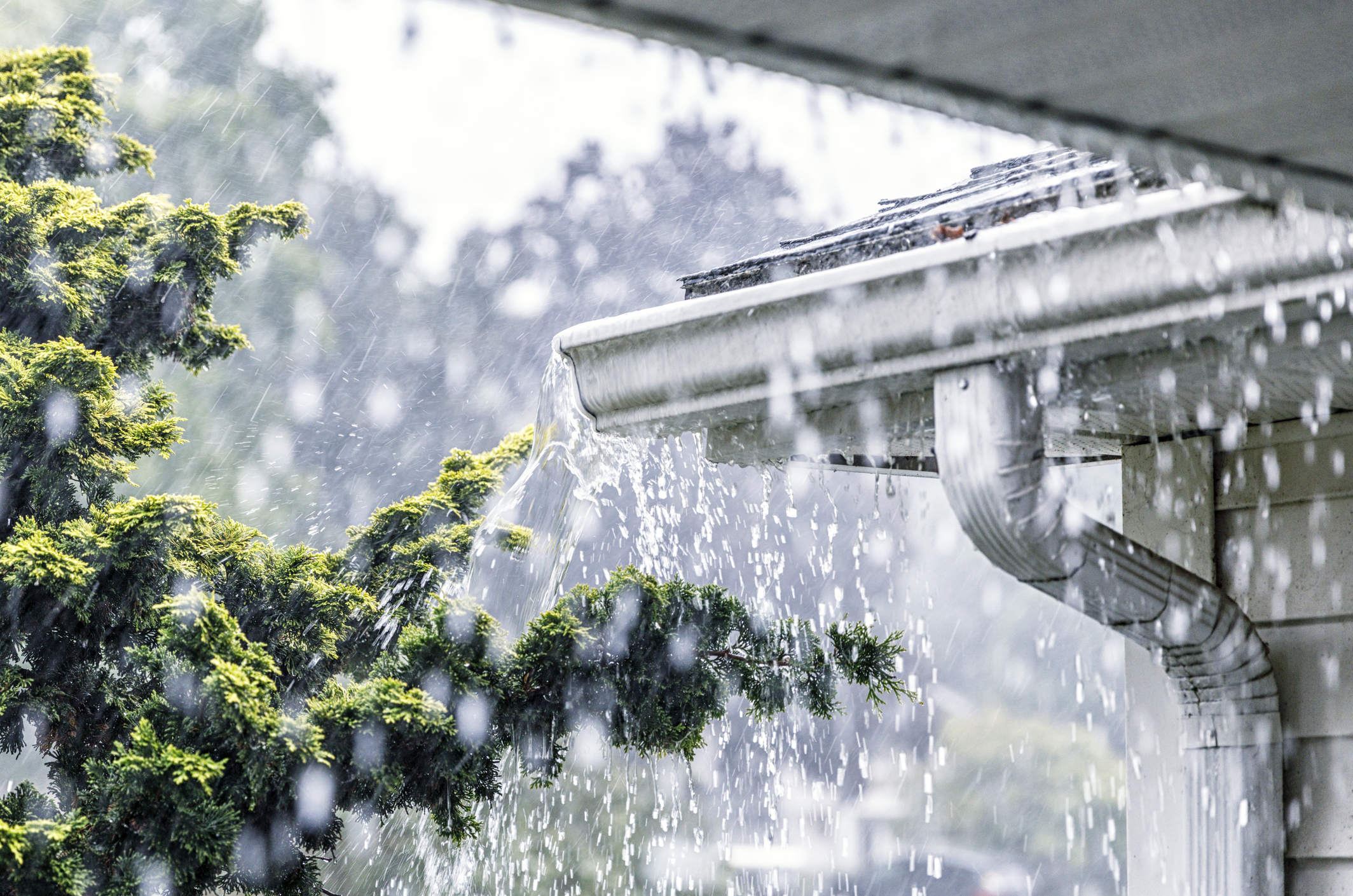 Professional Gutter Cleaning Service in Florida