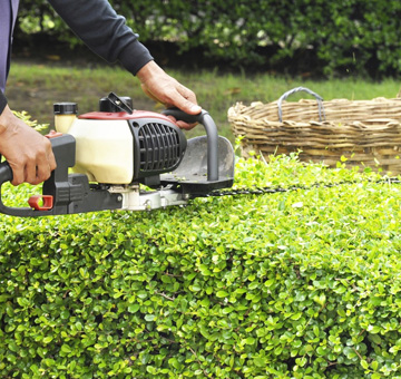 Hedge Trimming by Evergreen Law Care in Gainesville, FL