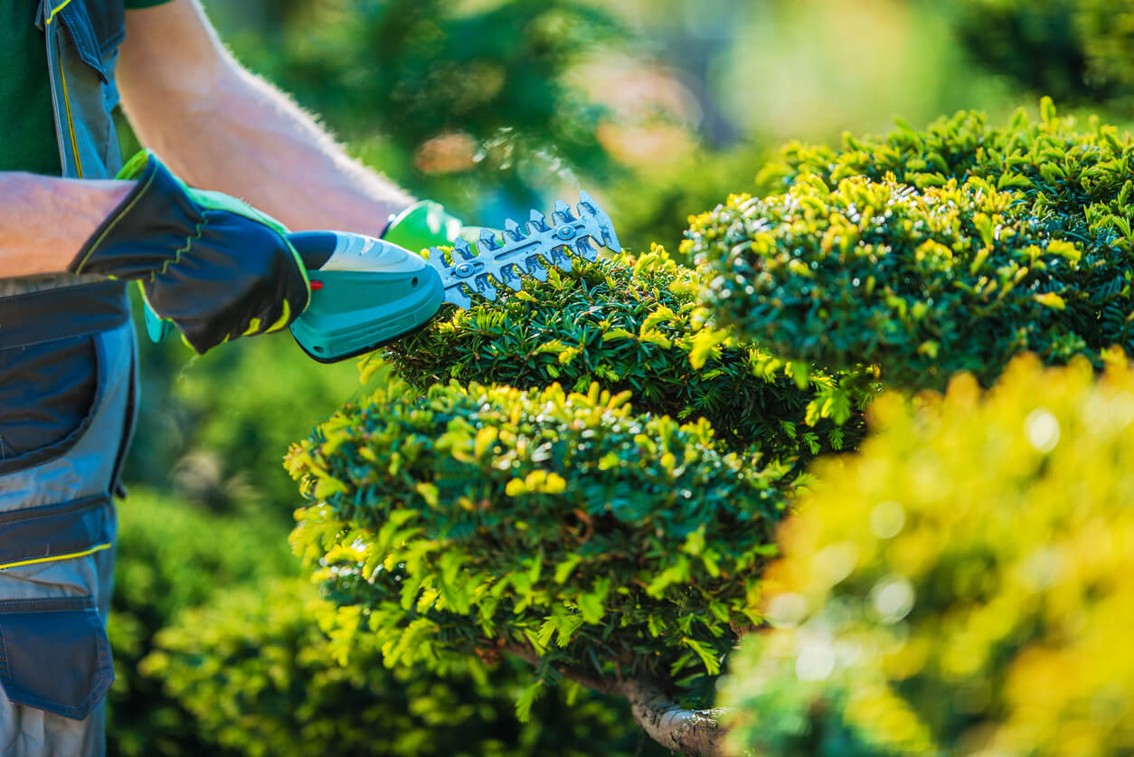 Improving Air Quality With Gainesville Commercial Landscaping