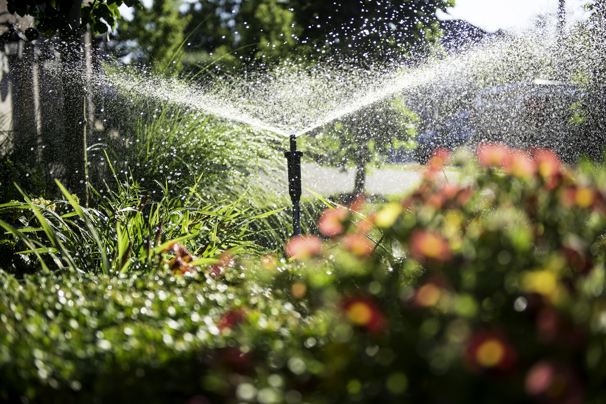 Professional Lawn Irrigation Repair in Florida