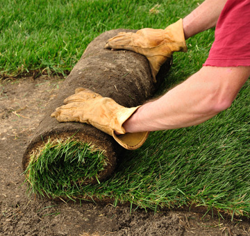 Sod Installation by Evergreen Law Care in Gainesville, FL