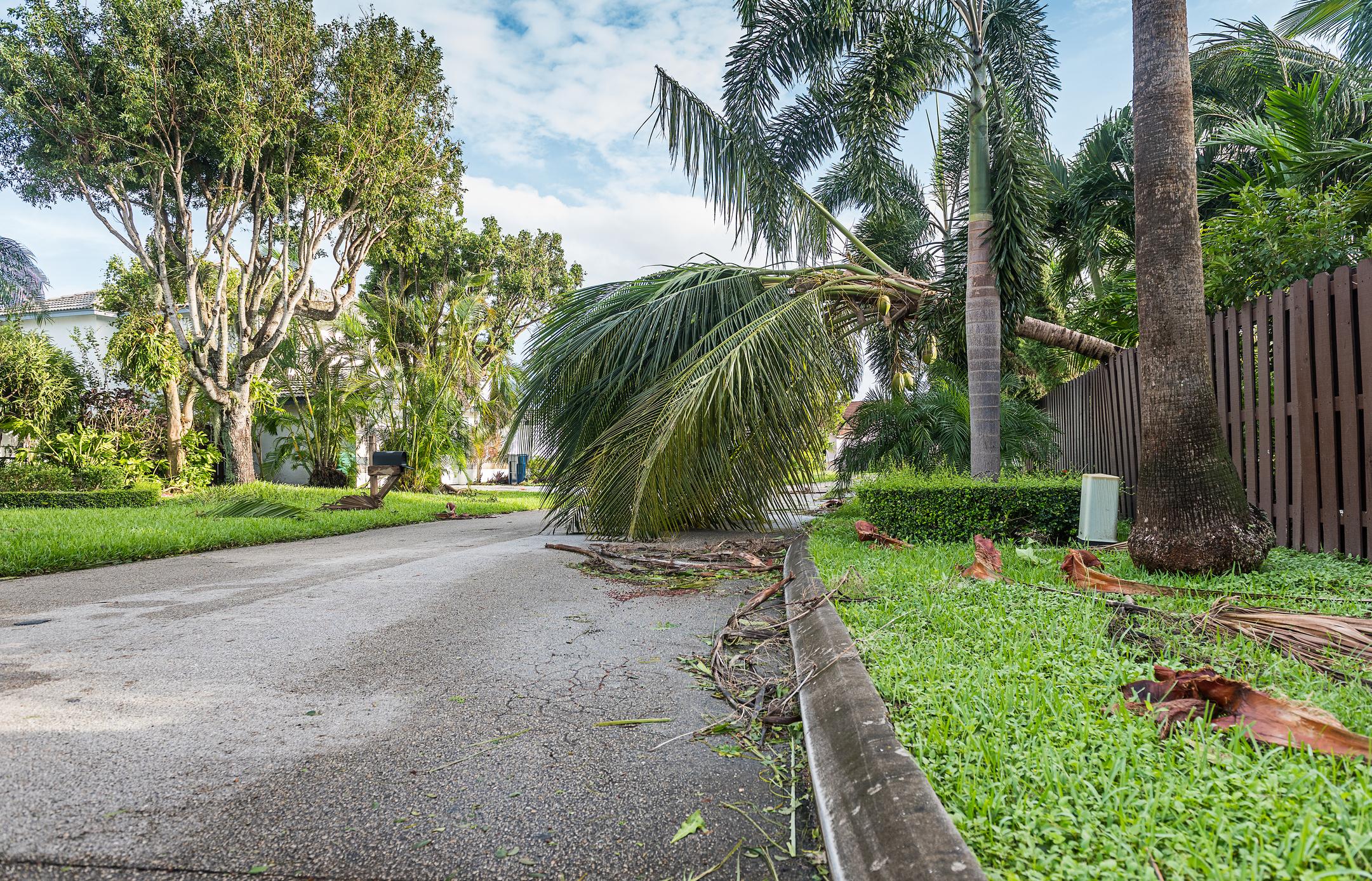 Storm Debris Removal Service in Florida