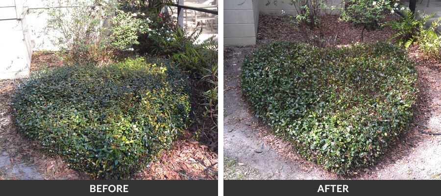 Gainesville Commercial Amp Residential Landscaping