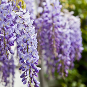 Image for 10 Plants You'll Regret Introducing In Your Yard