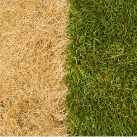 Image for Decide Whether To Renovate Or Redo Your Lawn In 3 Questions