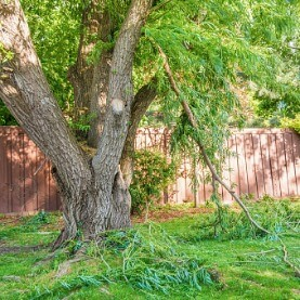 Image for 5 Ways To Protect Your Lawn & Garden From Summer Storms