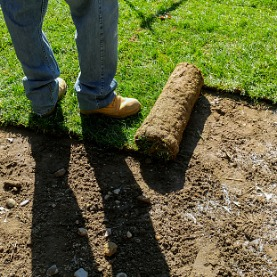 Image for 5 Lawn Issues Sod Can Solve