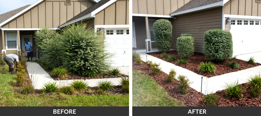 Hedge Trimming Amp Shrub Pruning In Gainesville Fl