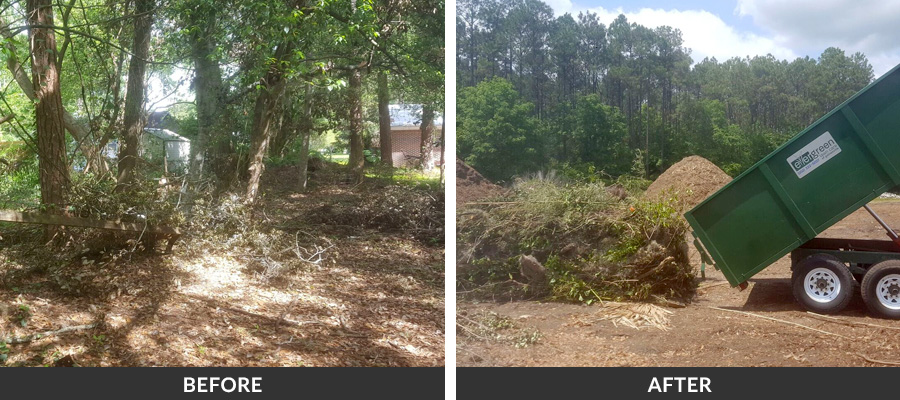 Debris Removal Services In Gainesville Fl