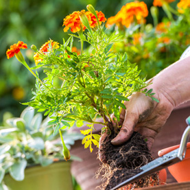 Now is the perfect time to plant flowers and vegetables!