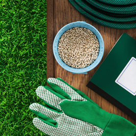 Now is a Great Time to Re-Seed Bare and Thin Spots in Your Lawn