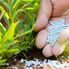 Should I use organic or chemical fertilizers?