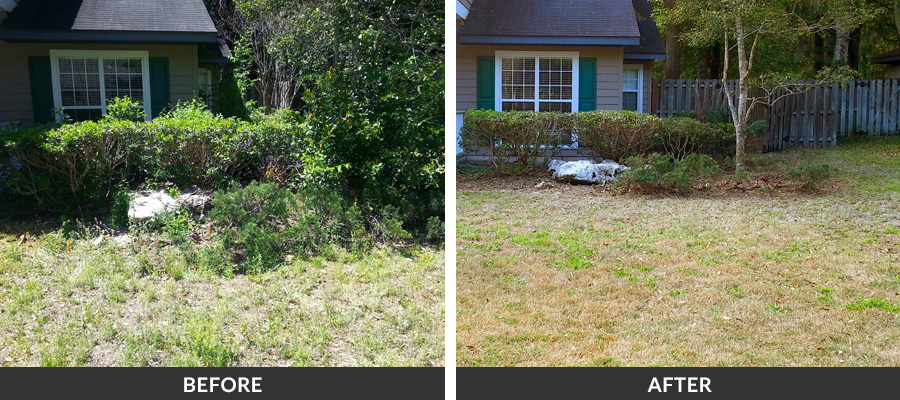 spring & fall yard cleanup services in gainesville, fl